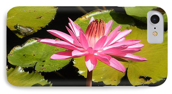 Pink Water Lilly With Frog IPhone Case by Jodi Terracina