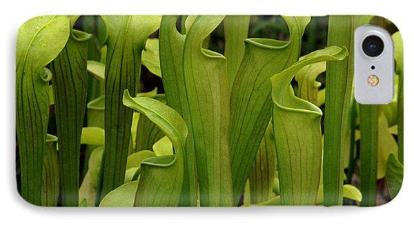 Pitcher Plants Phone Case by Bob Christopher