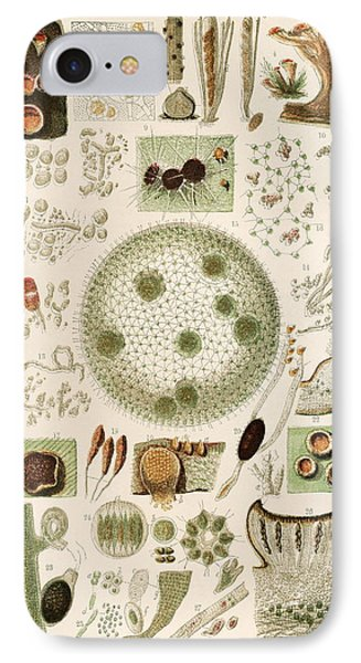 Plant And Fungi Microscopy, 19th Century Phone Case by