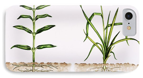 Plant Comparison Phone Case by Lizzie Harper