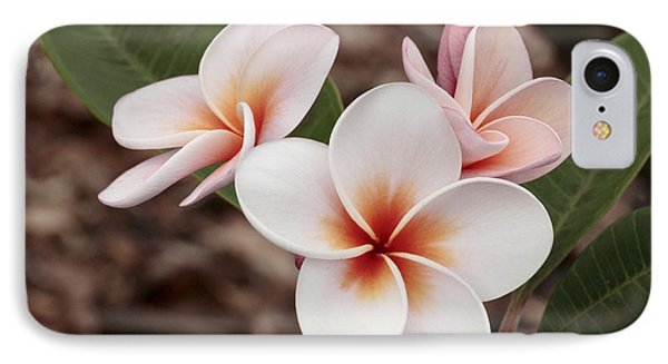 IPhone Case featuring the photograph Plumeria   Kona Hawii by James Steele
