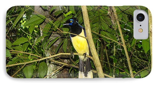 IPhone Case featuring the photograph Plush-crested Jay by David Gleeson