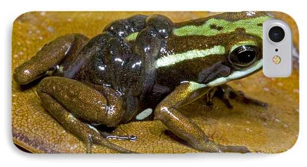 Poison Frog With Tadpoles IPhone Case by Dante Fenolio