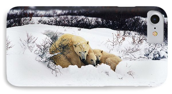 Polar Bear Cubs, Churchill, Manitoba IPhone Case