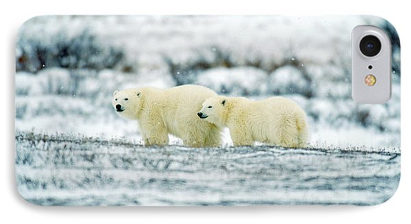 Polar Bears, Churchill, Manitoba Phone Case by Mike Grandmailson