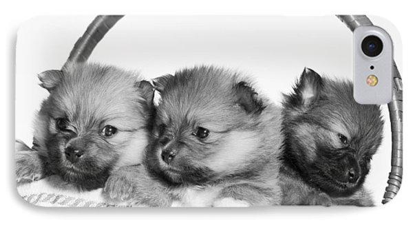 Pomeranian Phone Case by Everet Regal