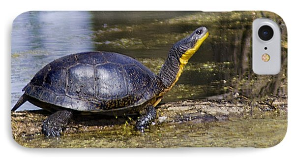 Pond Turtle Basking In The Sun IPhone Case