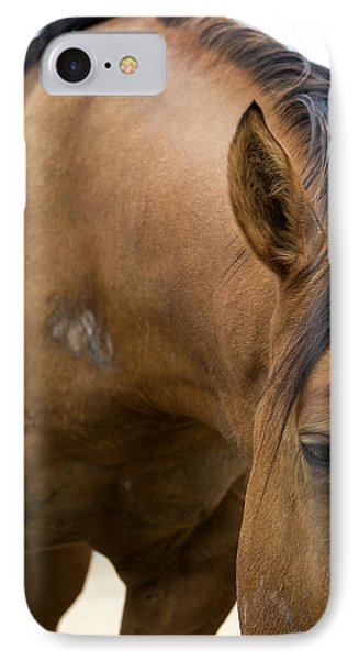 IPhone Case featuring the photograph Curious Pony by Lorraine Devon Wilke