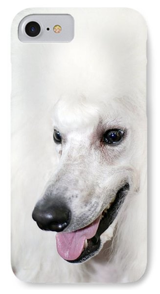 Poodle IPhone Case by Photostock-israel