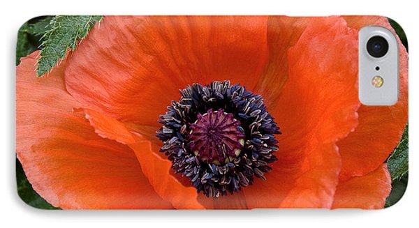 Poppy II IPhone Case by Michael Friedman