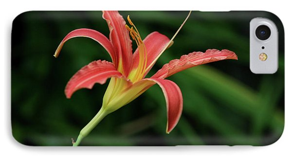 IPhone Case featuring the photograph Popsicle Bloom by Lorraine Devon Wilke