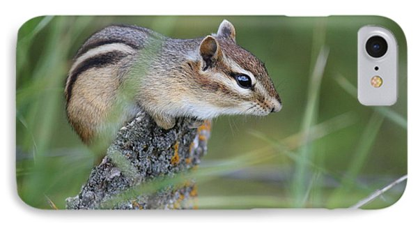 IPhone Case featuring the photograph Portrait Of A Chipmunk by Penny Meyers