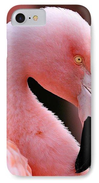 Portrait Of A Flamingo IPhone Case
