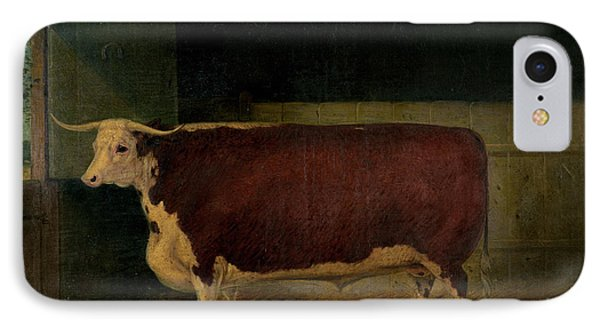Portrait Of A Prize Hereford Steer Phone Case by Richard Whitford