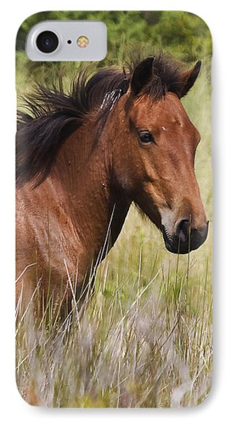 Portrait Of A Spanish Mustang IPhone Case by Bob Decker