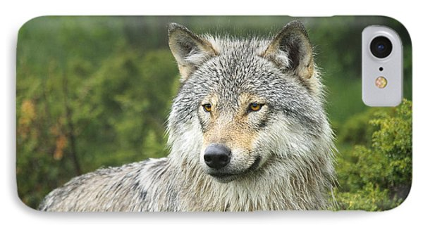 Portrait Of A Wolf IPhone Case by Andy-Kim Moeller