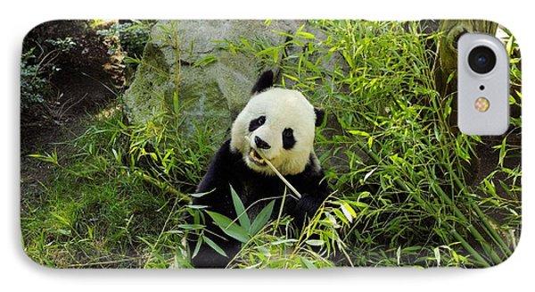 Posing Panda Phone Case by John  Greaves