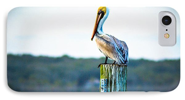 IPhone Case featuring the photograph Posing Pelican by Shannon Harrington