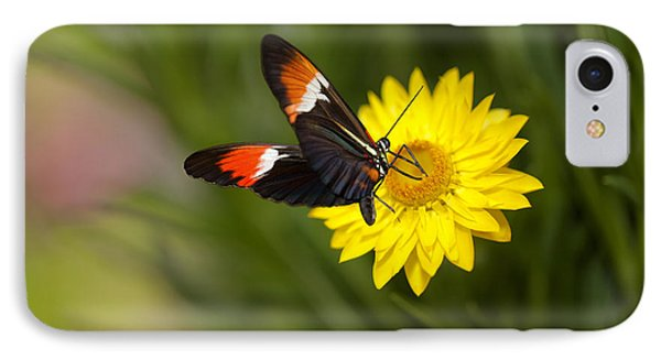 Postman Butterfly On Yellow Straw Flower IPhone Case