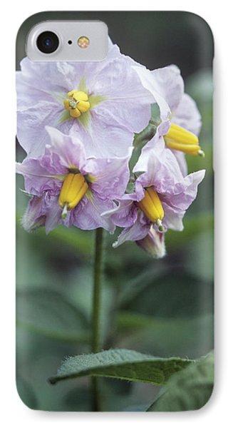 Potato (solanum Tuberosum 'charlotte') Phone Case by Maxine Adcock