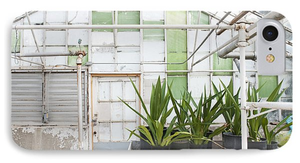 Potted Plants In A Greenhouse Phone Case by Thom Gourley/Flatbread Images, LLC