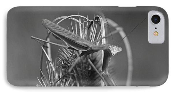 Praying Mantis IPhone Case by Betsy Knapp