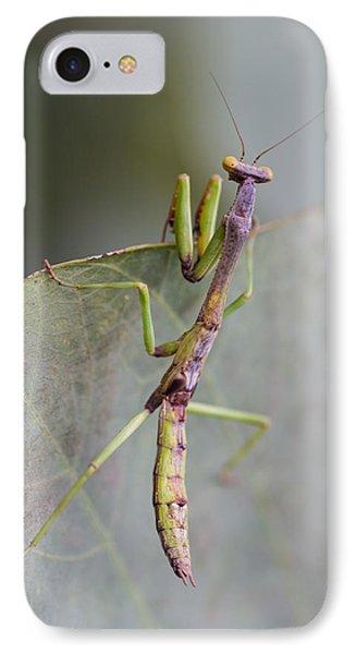 praying Mantis Phone Case by Craig Lapsley