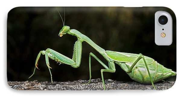 Praying Mantis Perched On A Tree IPhone Case by Jack Goldfarb