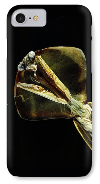 Praying Mantis IPhone Case by Volker Steger