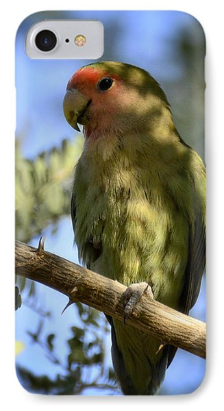 Pretty Bird IPhone Case by Saija  Lehtonen