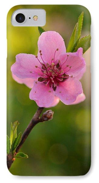 Pretty Pink Peach Phone Case by JD Grimes