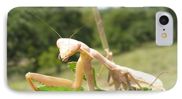 Preying Mantis IPhone Case by Mark Robbins