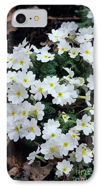 Primroses Phone Case by Adrian Thomas