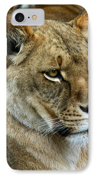 Proud Lioness IPhone Case by Cindy Haggerty