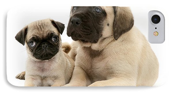 Pug And English Mastiff Puppies Phone Case by Jane Burton