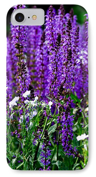 Purple Lavender Flower In Bloom  IPhone Case by Carol F Austin