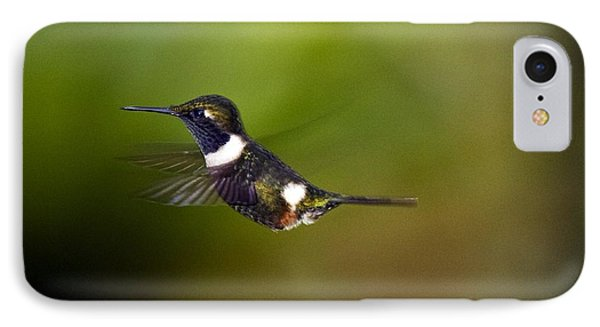 Purple-throated Woodstar Phone Case by Bob Gibbons