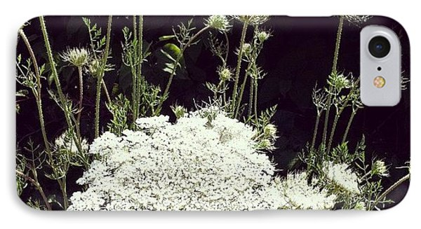 Queen Anne's Lace IPhone Case by Michelle Calkins