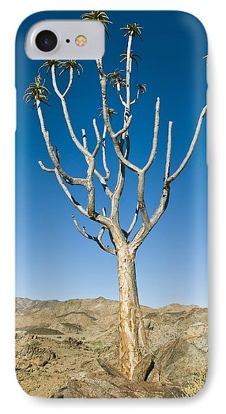 Quiver Tree Phone Case by Peter Chadwick