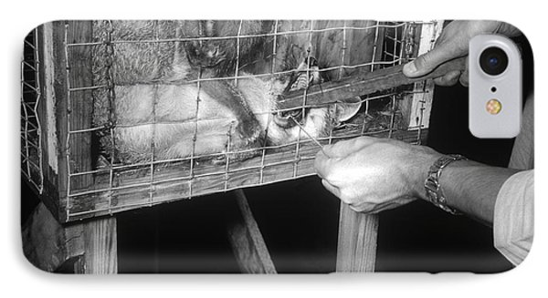 Rabid Fox, 1958 Phone Case by Science Source
