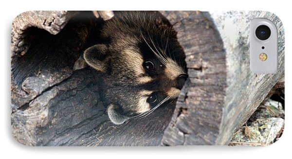 IPhone Case featuring the photograph Raccoon In Hiding by Kathy  White