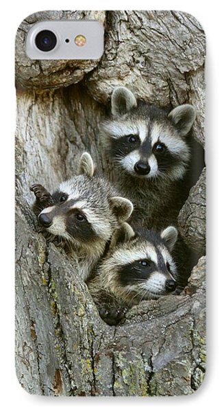 Raccoons Peeking Out IPhone Case by Myrna Bradshaw