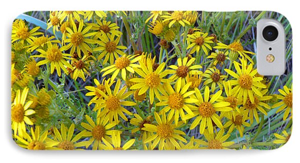 IPhone Case featuring the photograph Ragwort - Tansy by Pamela Patch