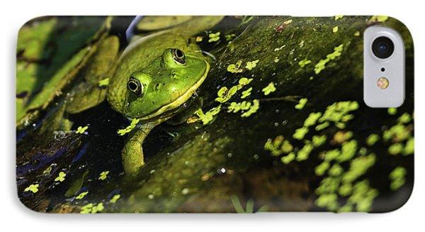 Rana Clamitans Or Green Frog IPhone Case by Perla Copernik
