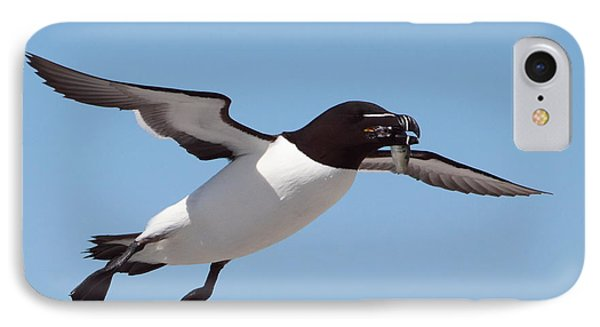 Razorbill In Flight IPhone 7 Case