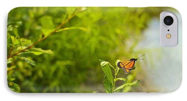 Ready Set Go Viceroy Butterfly IPhone Case by Marianne Campolongo