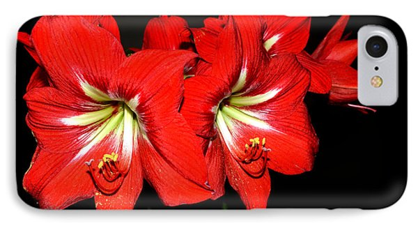 Red Amaryllis Twins Phone Case by Pravine Chester