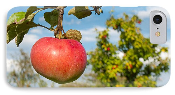 Red Apple On Branch Of Tree Phone Case by Matthias Hauser