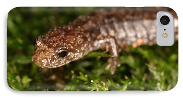 Red-backed Salamander IPhone Case by Ted Kinsman