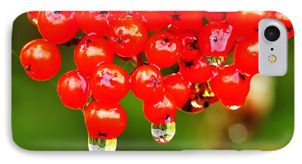 Red Berries And Raindrops Phone Case by Thomas R Fletcher